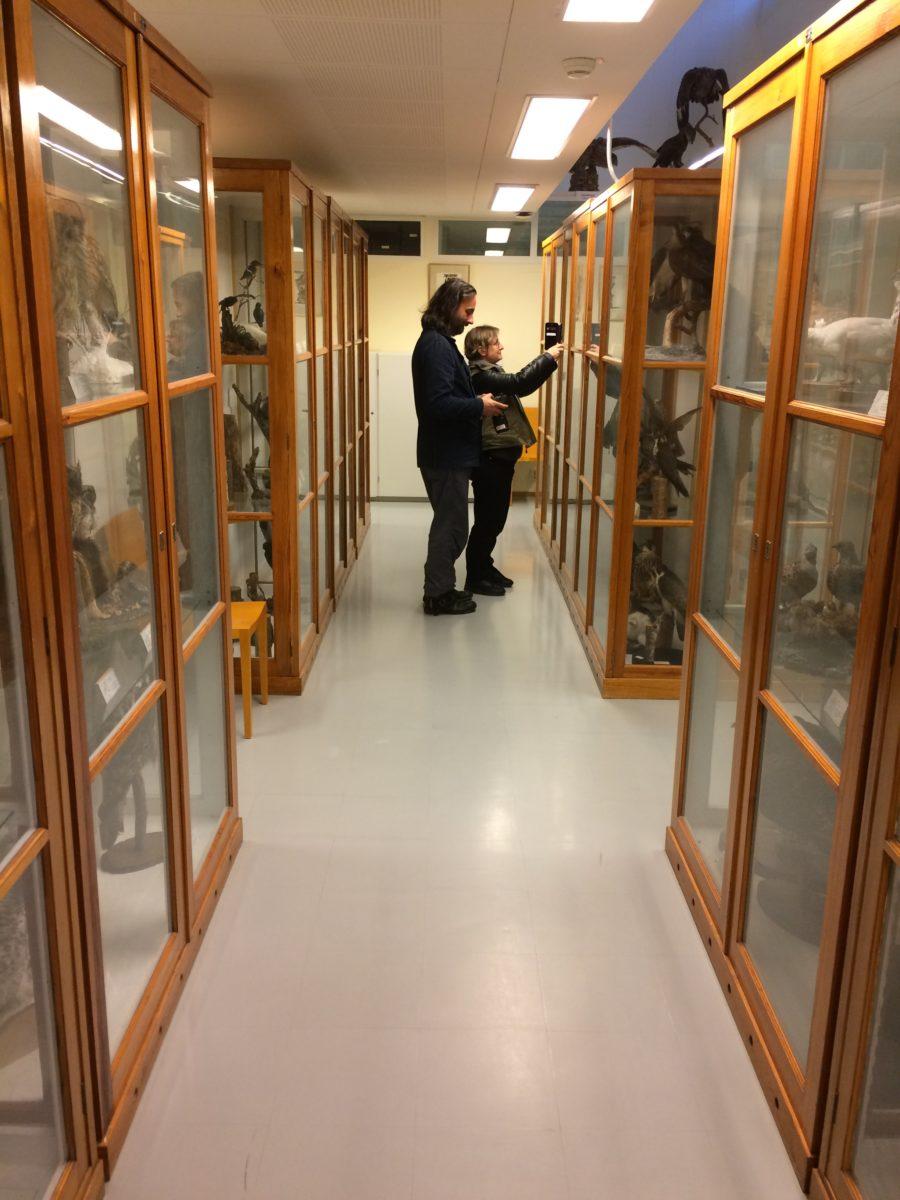 Zoological Museum, Turku University. Photo Taru Elfving.