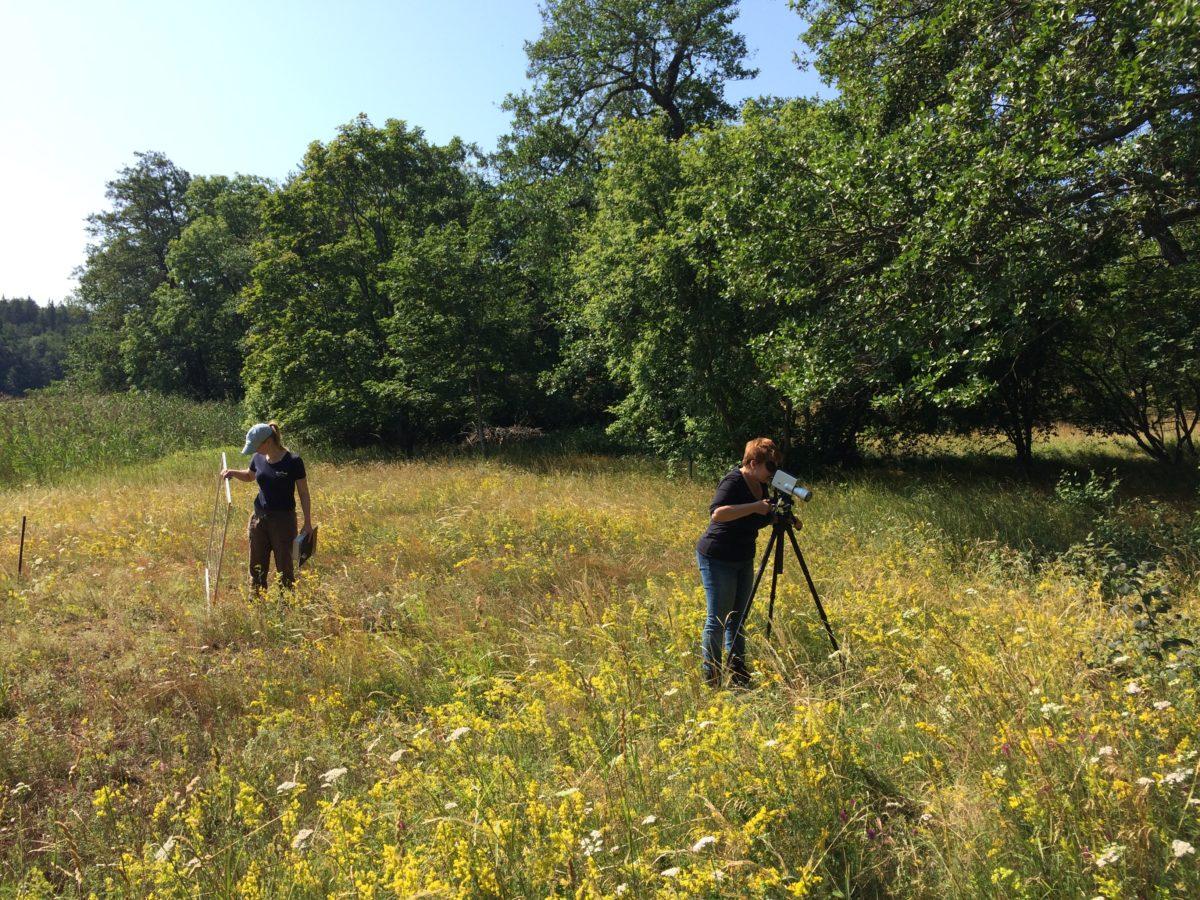 Saara Ekström and Jasmin Inkinen carrying out meadow research.