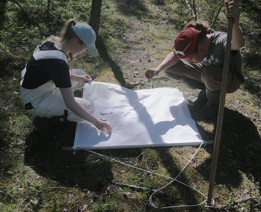 Tick research in Seili. Photo Laura Beloff.
